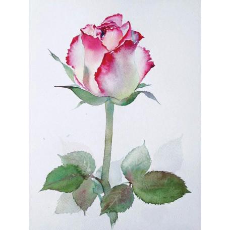 Принт А5 Роза 4